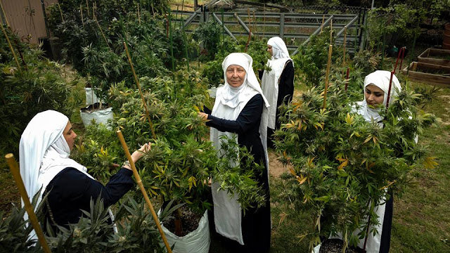 Meet the Reverend Sisters growing and selling weed