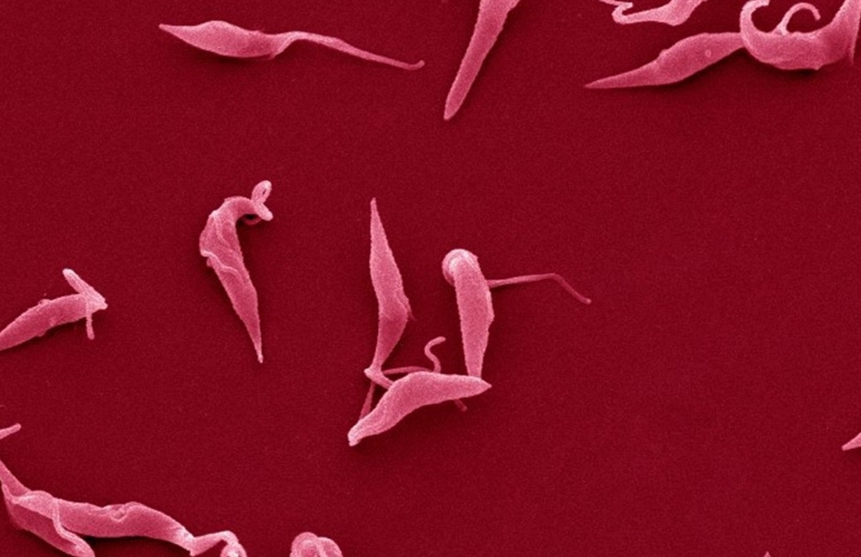 Is the 'parasites in semen' dating story true or false?