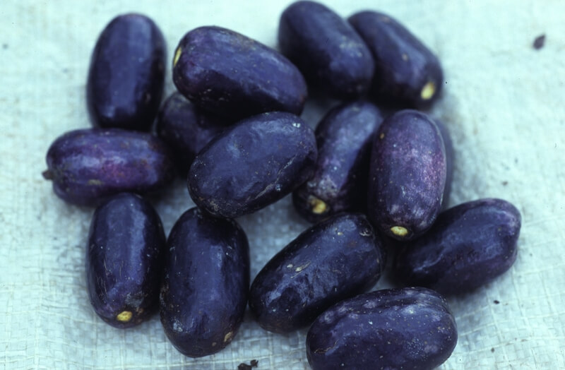 The correct way to prepare African pear or ube in Nigeria