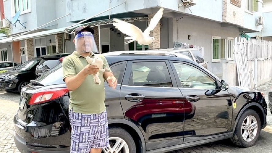 Daddy Freeze's pigeons fly as he releases them – Video